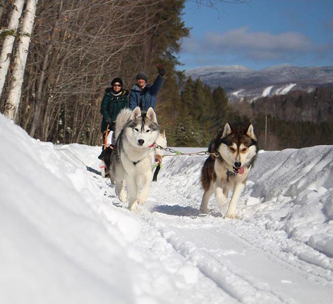 mont tremblant dog sledding reviews