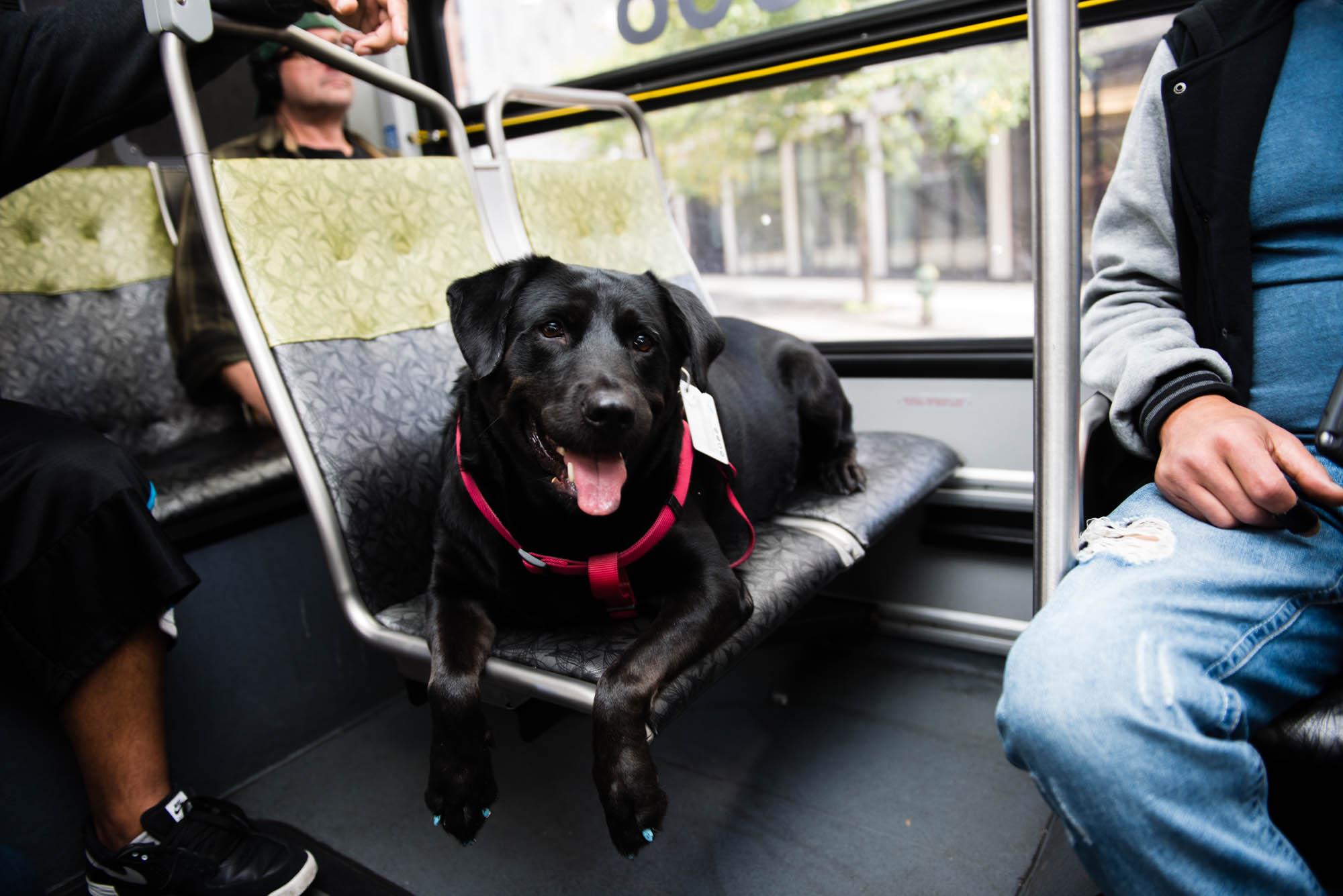 world wide pet transport reviews